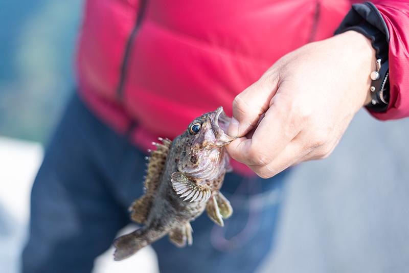 釣った魚は翌日の朝食に。